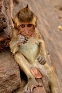 Visiting the monkey temple