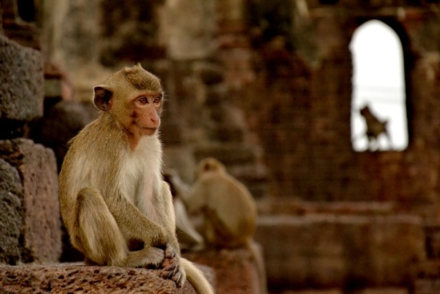 Visit the monkeys