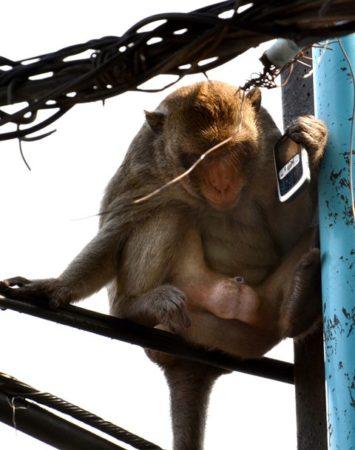 Monkey with phone
