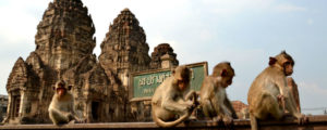 How to visit the Thailand Monkey Temple