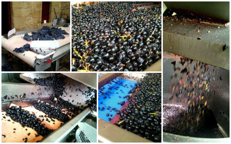 Marques de Riscal wine production