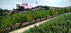 Marques de Riscal vineyard