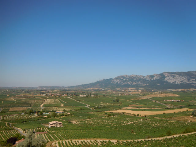 The vineyards of Laguardia