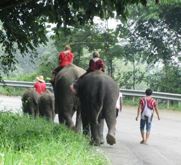 Elephants on the Samoeng Loop