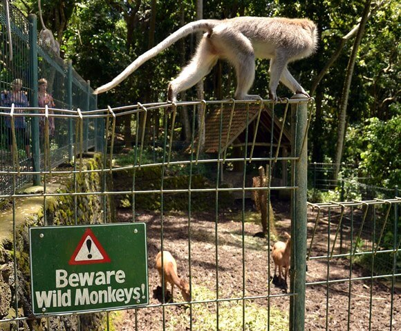 Can you play with the monkeys in the Ubud monkey forest