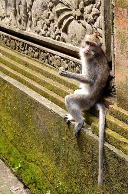 Monkey steals things in the monkey forest