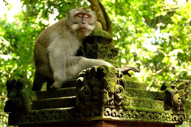 Visiting the Monkey Forest in Ubud