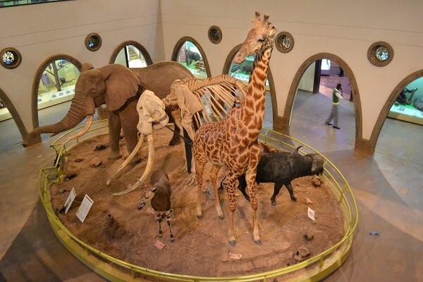 Centrepiece of Nairobi National Museum