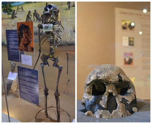 Early human exhibits in Nairobi National Museum