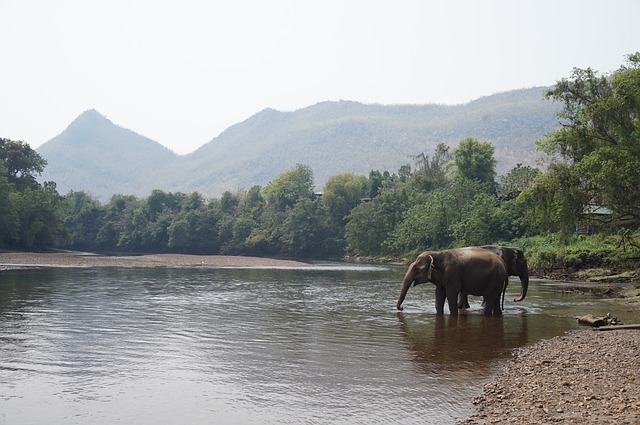 Visiting elephants in Thailand