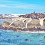 Visitng Seal Island in Cape Town to see Great White Sharks