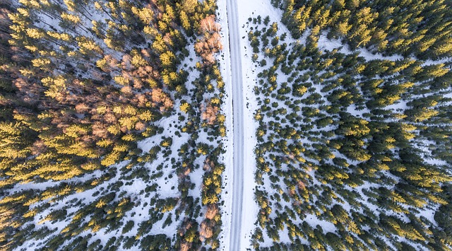 Drone photo of a snowy forest