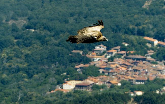 Above the eagles in La Pena