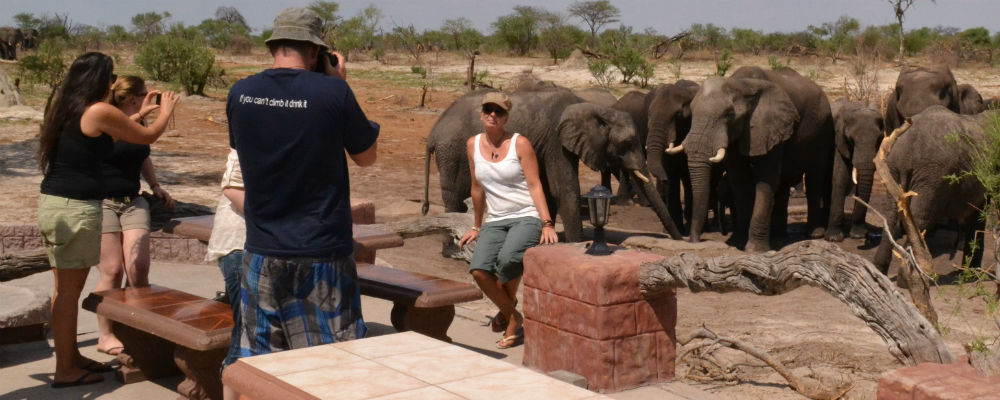 Getting close to wild African Elephants at Elephant Sands campsite