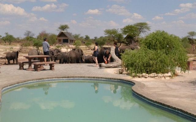 Elephant sands swimming pool
