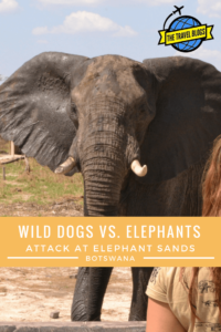 When the elephants came under attack at Elephant Sands Campsite in Botswana