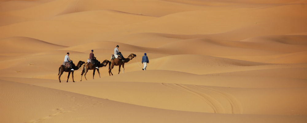 Camel trekking in the Moroccan desert