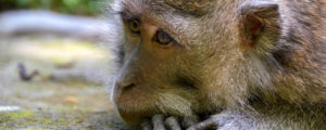 What you need to know before visiting the Ubud Monkey Forest