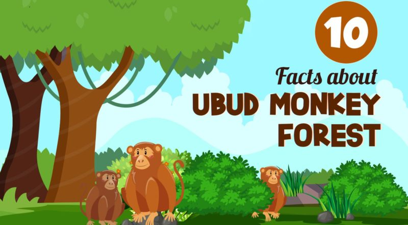 Fun facts about the Ubud Monkey Forest