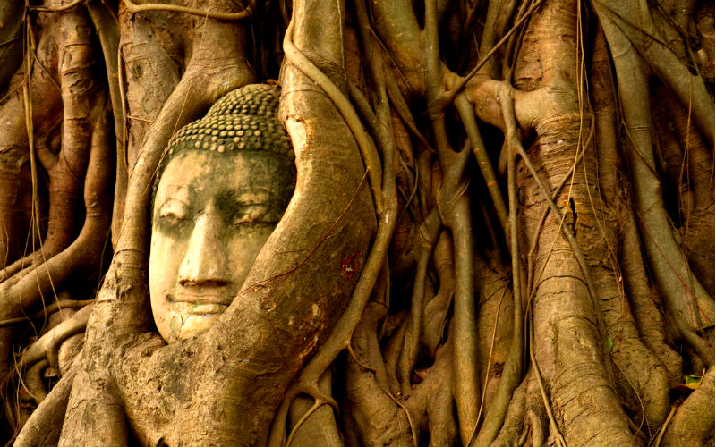 Ayutthaya head in tree roots