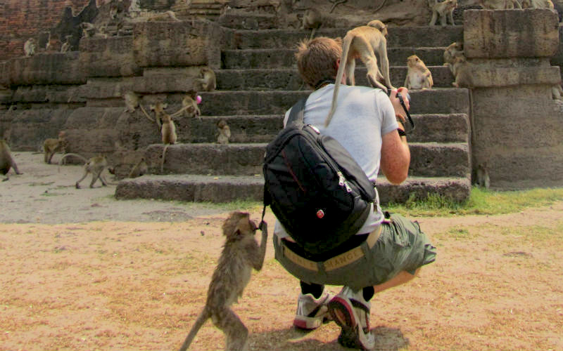 Monkey experience in Thailand