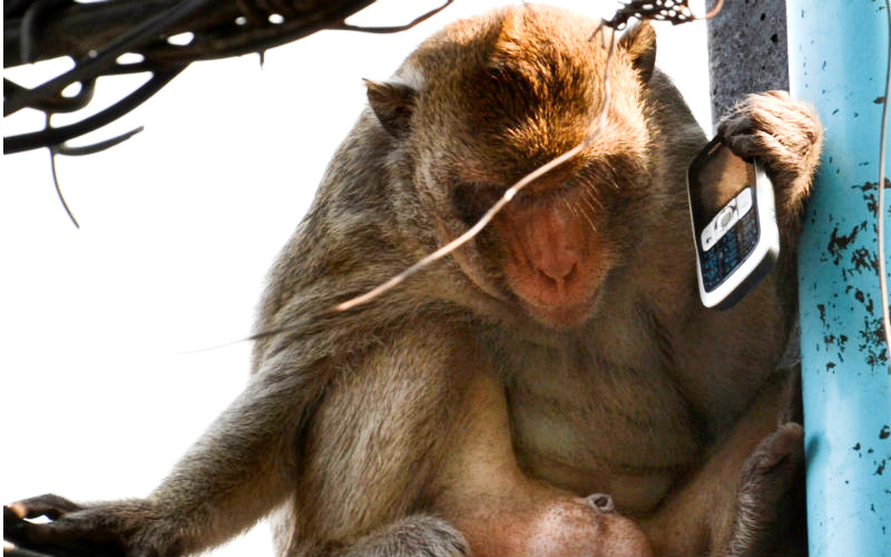 Monkey with a phone 2