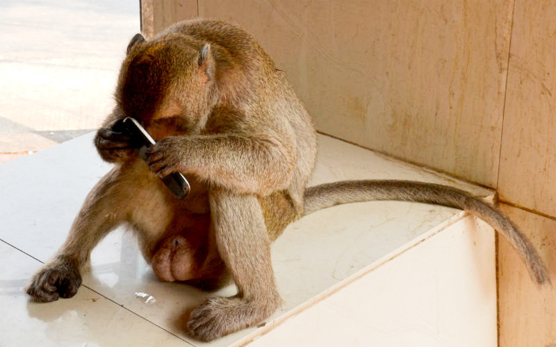 Monkey with a phone 1