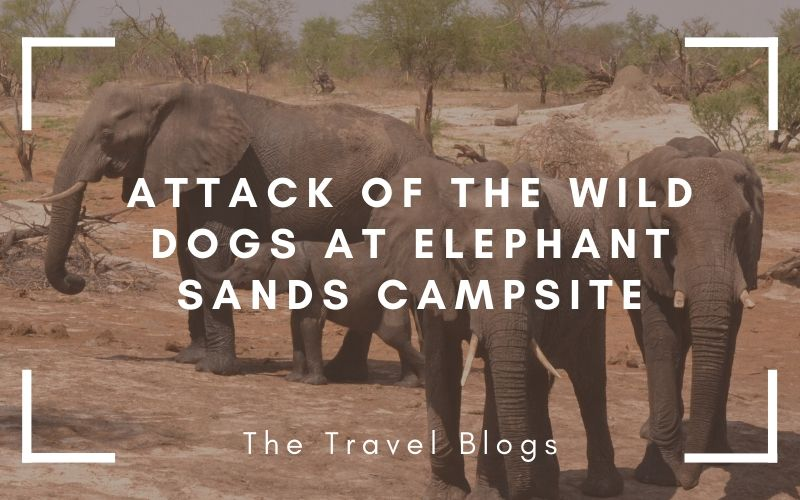 Elephants attacked by wilds dogs at Elephant Sands Campsite in Botswana