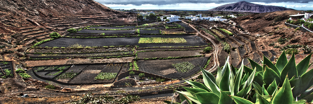 Bodegas Guiguan Vineyard Lanzarote