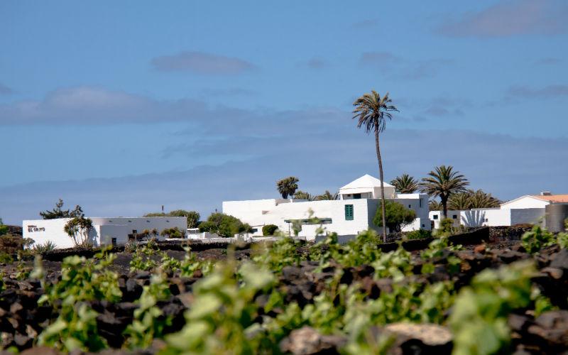 El Grifo Vineyard Lanzarote