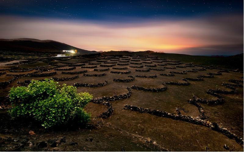 Los Bermejos Vineyard Lanzarote