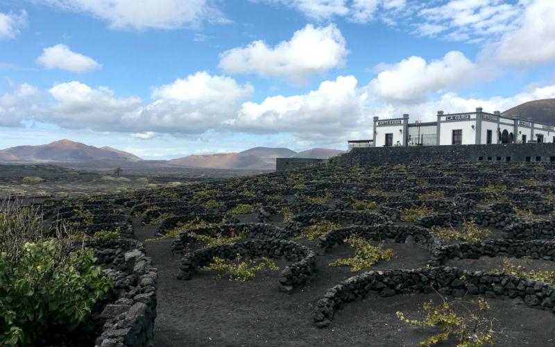 La Geria Vineyard Lanzarote