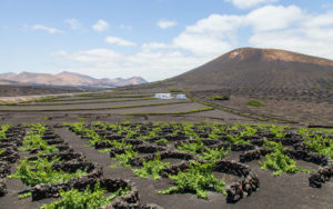 How to visit the Lanzarote Vineyards