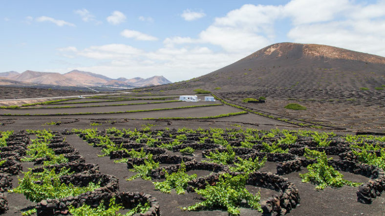 Lanzarote Wineries: 10 Incredible Volcanic Vineyards 🍷