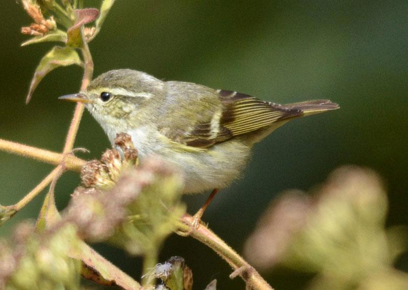 lengteng-wildlife-sanctuary