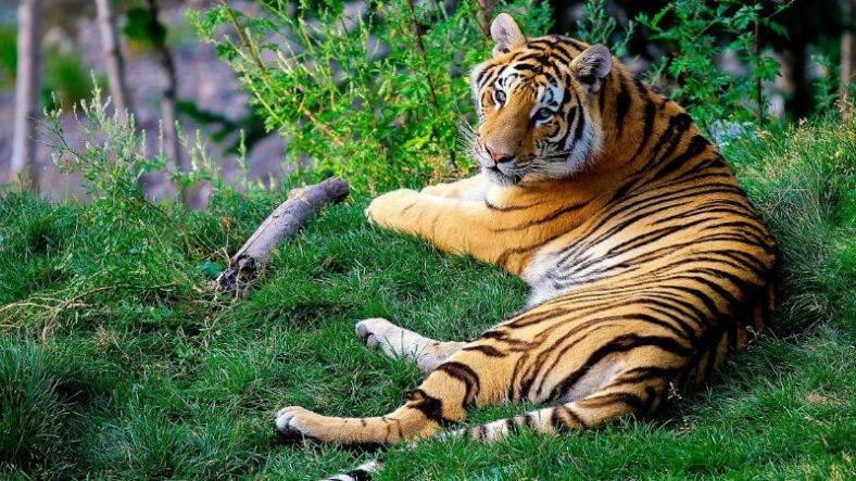 Visit tigers in Mizoram