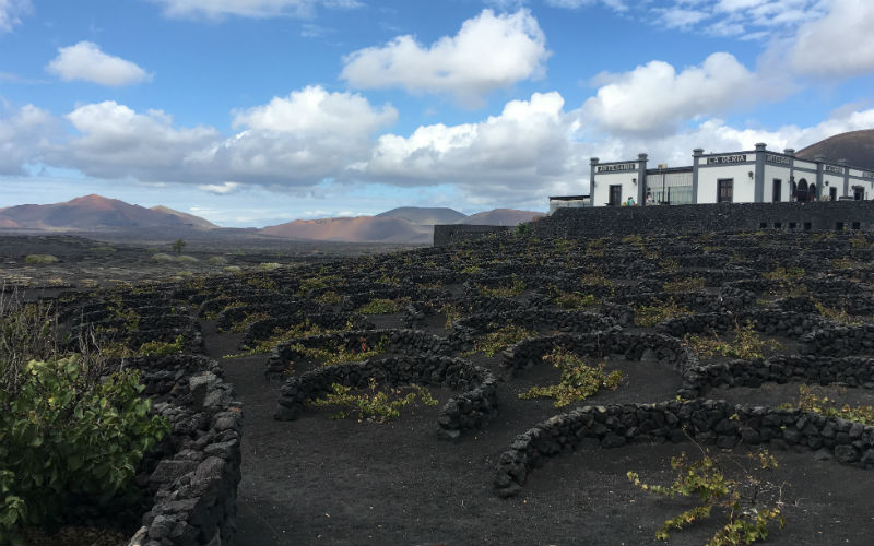 One of Lanzarote's largest vineyards