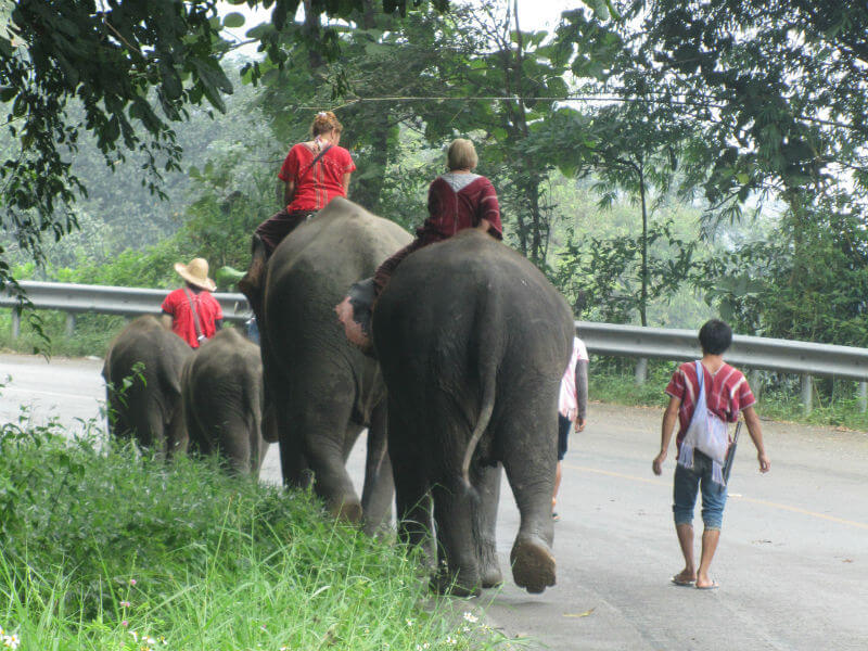 Elephant in Chaing Mai