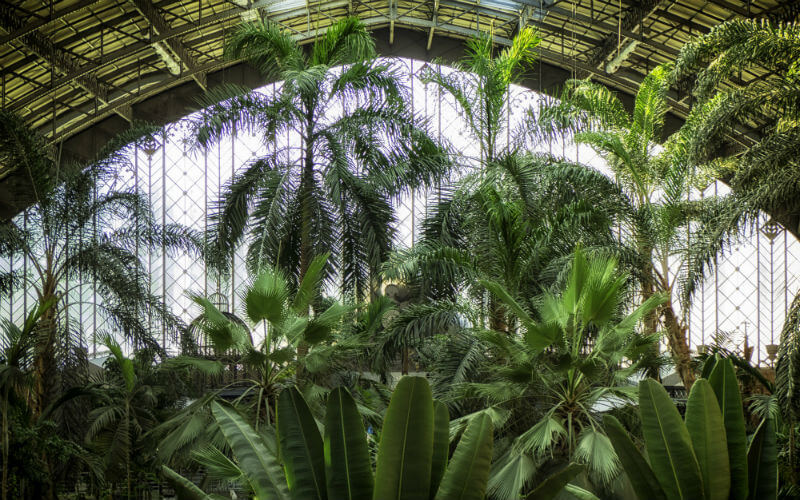 The tropical garden in Atocha station