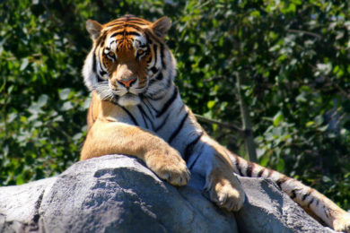 Visiting the Pench Tiger Reserve in India