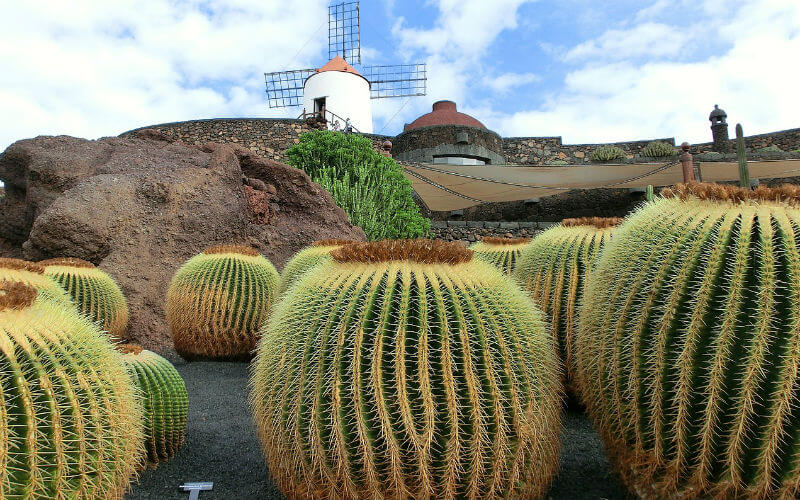 The Cactus garden, one of César Manrique's Lanzarote works
