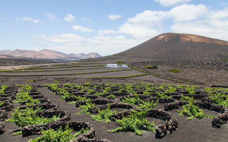 Hiring a car in Lanzarote can be a great way to visit the vineyards of La Geria