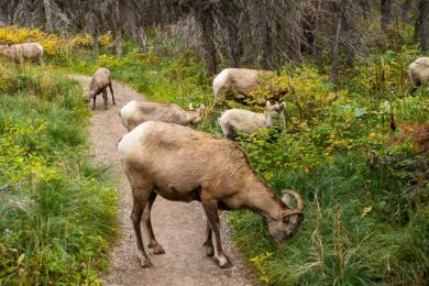 Montana Road Trip