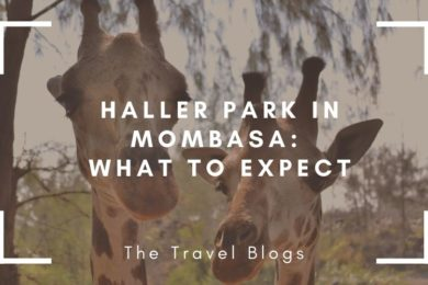 Haller park in Mombasa is a great spot so see some rescued African wildlife and feed giraffes