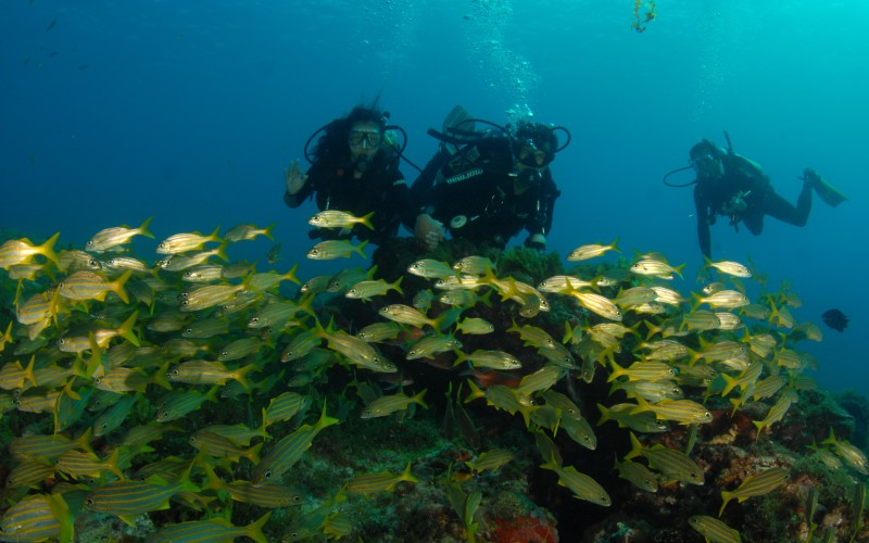 Loads of yellow fishes while Scuba diving in Jamaica