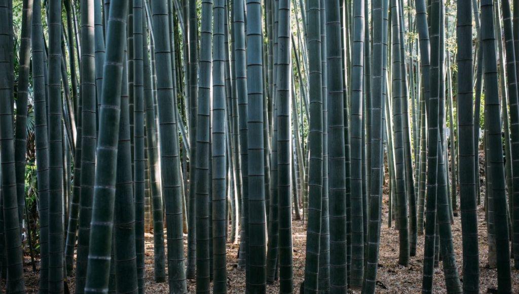 the Bamboo Grove of Hokokuji