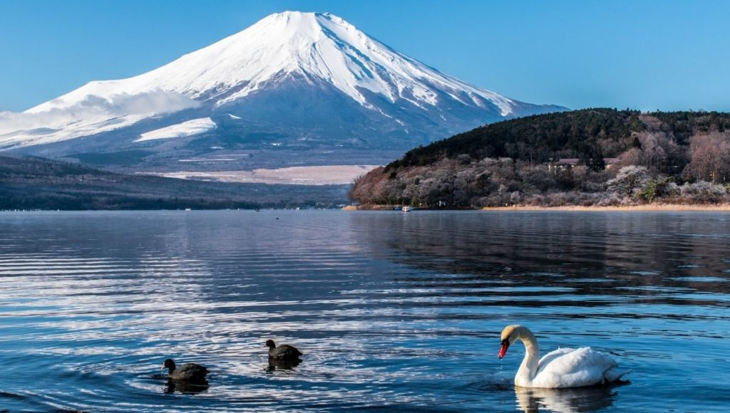 A view of Mt Fuji from the lake