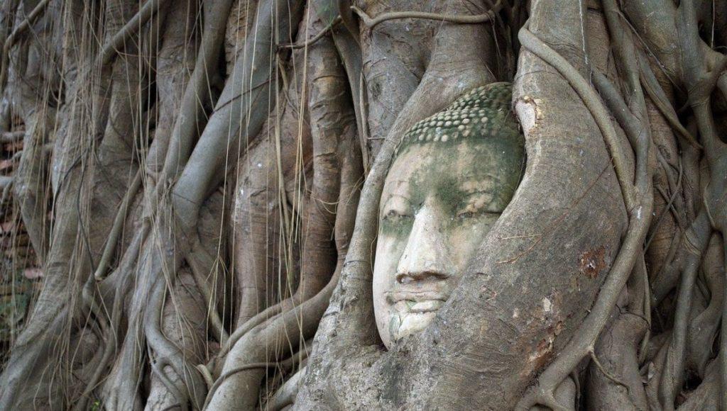 The buddhas head in Ayutthaya