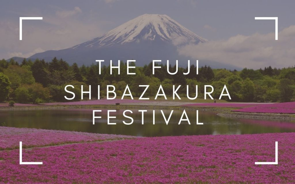 The Fuji Shibazakura Festival | Is It Really Worth It?