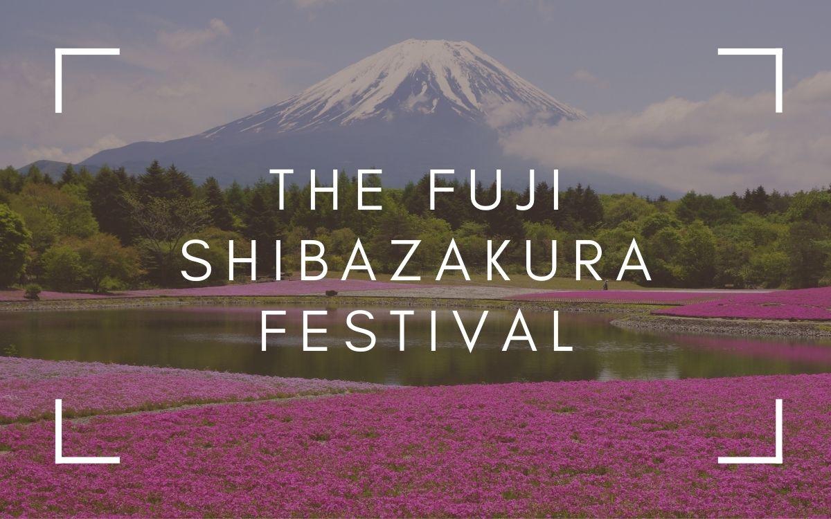 The Fuji Shibazakura Festival | Is It Really Worth It?